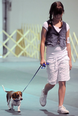 Windsor resident Stacia Harper, 12, and her dog, Toby, walk around the ring together while competing in the dog obedience show Saturday at The Ranch during the Larimer County Fair.