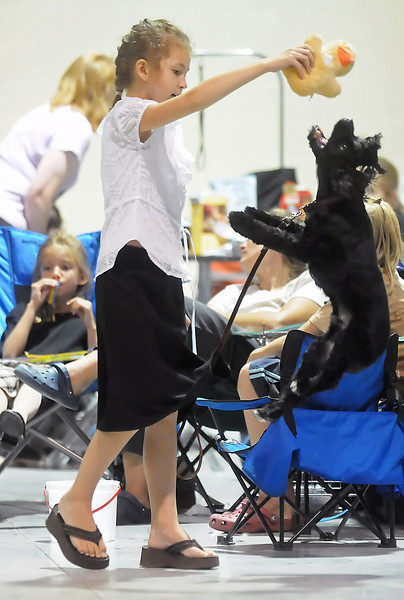"Ten-year-old Loveland resident Paige Prestien's dog Mugsy leaps into the air to grab his favorite toy called ""ducky"" while playing together as they wait to compete in the dog show Saturday at The Ranch during the Larimer County Fair."