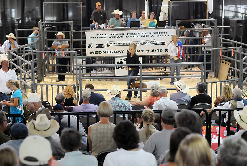 Leah Santillanes of Loveland leads her reserve grand champion market goat around the ring during the Larimer County Fair Junior Livestock Sale on Wednesday at The Ranch.