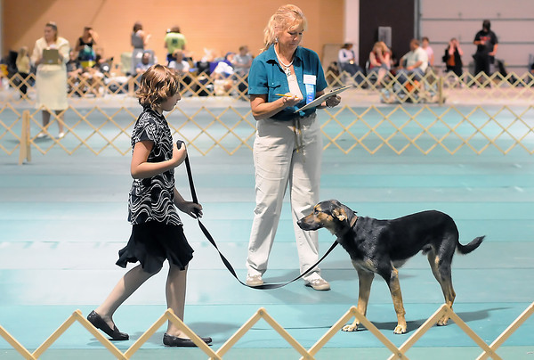 Haley Fischer, 10, of Berthoud, and her German shepard/hound mix dog named Sam work together in the obedience portion of the dog show in front of judge Shelley Bergstraser on Saturday at The Ranch during the Larimer County Fair.