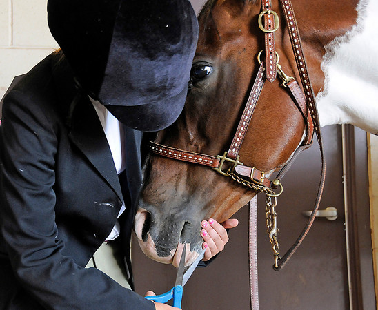 Savanna Sehe, 14, of Berthoud gives her horse penny a quick trim before the English Equitation Walk/Trot competition Sunday at the Ranch in Loveland. Penny, also 14, doesn't like trimmers so Savanna uses scissors instead.