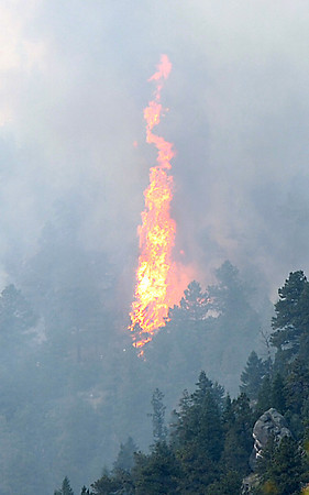 Flames engulf a tree during a wildfire near Glen Haven on Tuesday, Sept. 8, 2009.