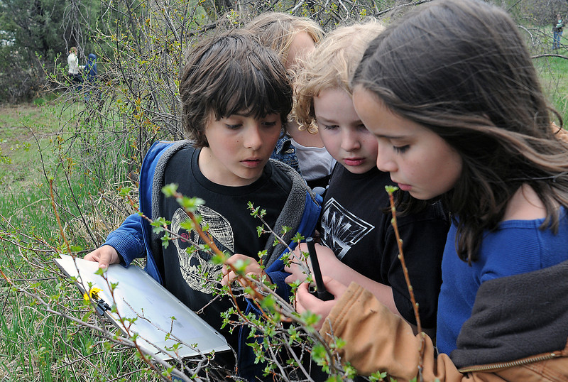 Big Thompson Elementary School students examine leaves before writing down a description Thursday during a nature walk at the outdoor education center as part of the school's Green Day activities. From left are Brandon Lobue, 9, Jackie Smith, 8, Kent Long, 8, and McKenna Olsen, 8.