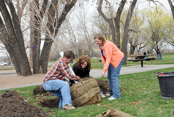 Jesse Thomas, left, Toni Shreffler and Amanda Thonen work together to plant a Redmond linden tree Friday at Barnes Park as part of the City of Loveland's recognition of Arbor Day. Employees from Loveland Walgreens stores volunteered to help plant five trees around the playground at the park.