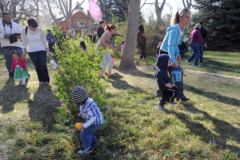 Two-year-old Levi Stephens of Loveland, front, picks up an Easter egg as he and other youngsters participate in the Berthoud Historical Society's Old-Fashioned Easter Egg Hunt on Saturday morning at the McCarty-Fickel Home historic house museum in Berthoud.