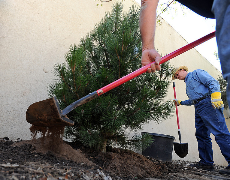 Levi Benedict, a member of the Independent Order of the Oddfellows, shovels dirt as he and Ralph Trenary, right, and another Oddfellow member plant Bosnian pine trees at the Thompson Park at Fourth Street and Lincoln Avenue in Loveland on Friday in honor of Arbor Day.