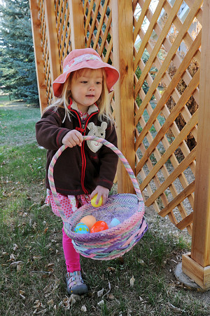 Helen Ingham, 3, plops a colorful plastic egg into her basket during the Berthoud Historical Society's Old-Fashioned Easter Egg Hunt at the McCarty-Fickel Home on Saturday, April 7, 2012.