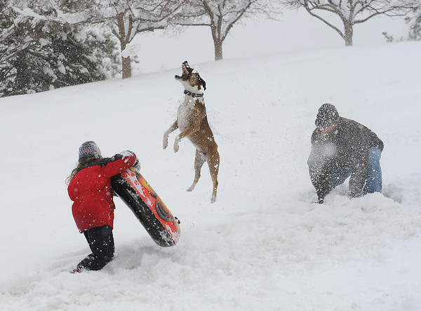 Huckle, a 1 year-old Catahoula, leaps into the air to catch a snowball as two of her owners, Storm Downing, 7, left, and Jason Downing play in the snow Wednesday.