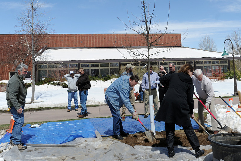City of Loveland Parks Department forestry specialist Rob MacDonald, left, looks on while volunteers finish planting an English oak tree Friday, April 19, 2013 outside the Loveland Public Library. Colorado State Forest Service forester Drew Clements representing the Colorado State Forest and the Arbor Day Foundation awarded the city with a Tree City USA Award at the event.