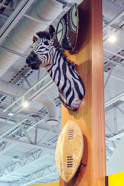 Artifacts from the 1960s-era Fort Collins business called the Safari Dinner Club that are on display at the Museum of Discovery include a mounted zebra head.