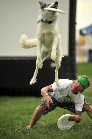 Jason Holland watches his dog Dash catch a frisbee Monday after the dog jumped over his back to get it during the Freestyle Frisbee K-9 Entertainment show at the Larimer County Fair at The Ranch in Loveland. Dash, who is eight years old, has been performing for years and travels with the show around the country and sometimes around the world to compete.