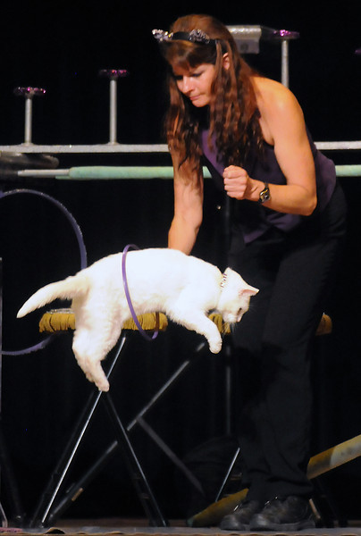 Tuna the cat jumps through a being held by Samantha Martin during the Amazing Acro-Cats Circus Cats of Chicago show Friday afternoon at the Rialto Theater.