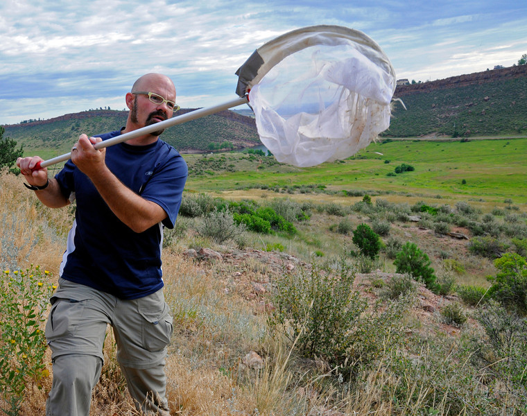 John Sovell catches a butterfly near Horsetooth Reservoir in Fort Collins as part of the cataloging of butterflies in the area. The data collected by John and researchers will be used to manage the open space in Larimer County.