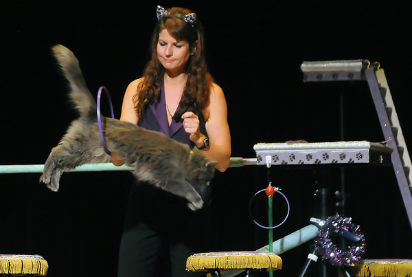 Feline performer Pudge jumps through a hoop being held by Samantha Martin during the Amazing Acro-Cats show Friday afternoon at the Rialto Theater.