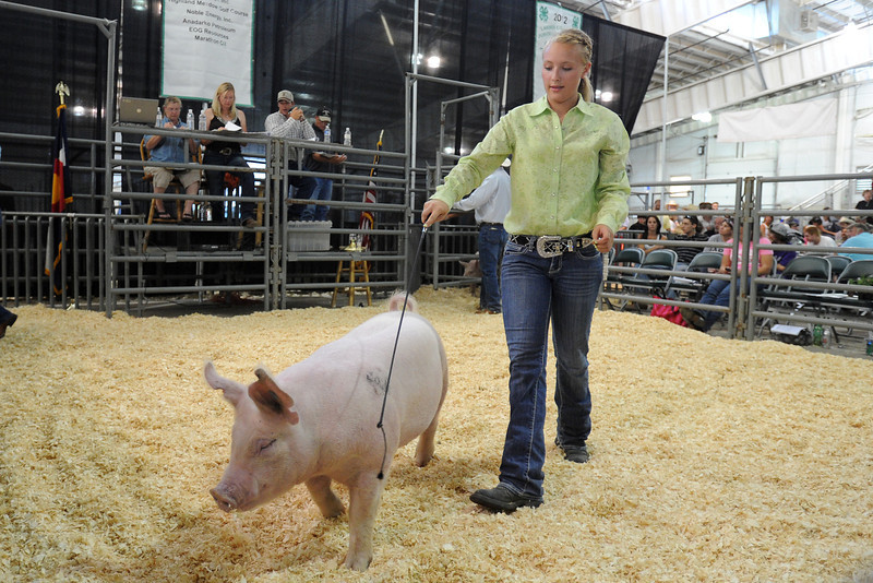 Loveland resident Ashley Gunckel, 16, walks in the show ring with her yorkshire pig that earned her lightweight reserve champion as it's auctioned off during the Larimer County Fair Junior Livestock Sale on Wednesday, Aug. 8, 2012 at The Ranch.