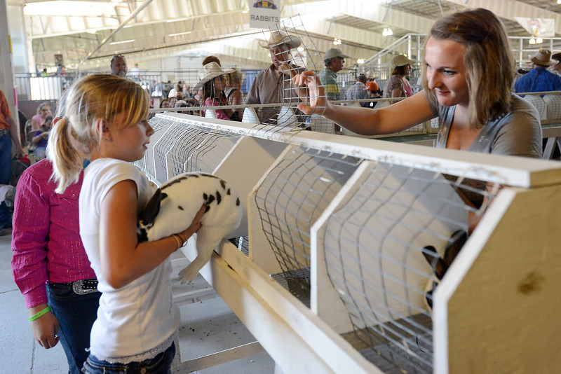 Kylie Davis, 10, puts her rabbit named Jo Jo into a cage with the assistance of junior superintendent Madeline Burbach during the 4-H rabbit judging for the Larimer County Fair on Saturday, Aug. 4, 2012 at The Ranch.