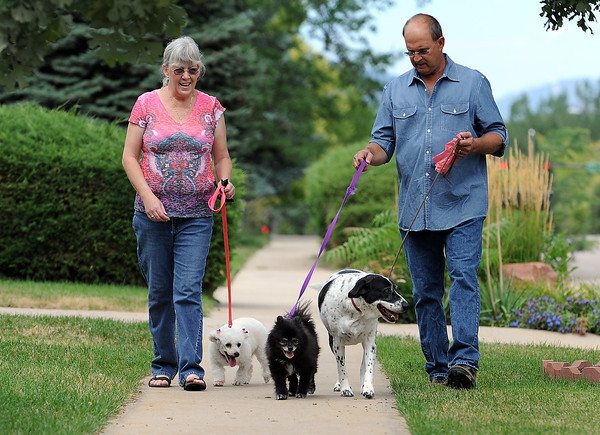 Leslie and Nelson Herman, volunteers and foster parents for Izzy's Place Senior Dog Rescue, take their dogs and a foster dog for a walk in their Loveland neighborhood Thursday. From left the dogs are, Bijou, a 6-year-old poodle mix they are fostering, Tessa, a 14-year-old Pomeranian, and Bubba, a 6-year-old German shorthaired pointer mix. Bubba originally a foster dog but adopted himself into their family permanently.
