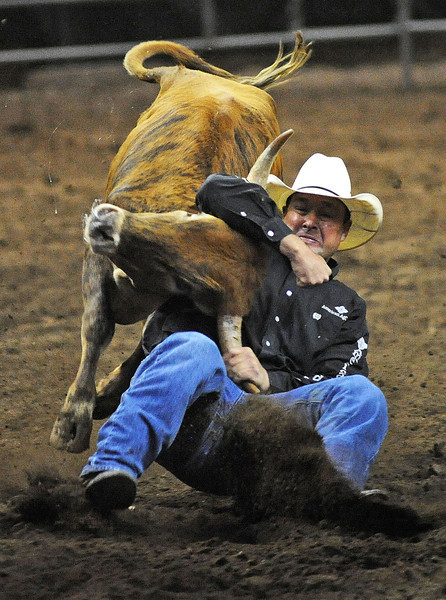 Billy Bugenig of Ferndale, Calif., takes down a steer during the steer wrestling competition on Monday night during the Larimer County Fair and Rodeo at the Budweiser Events Center.