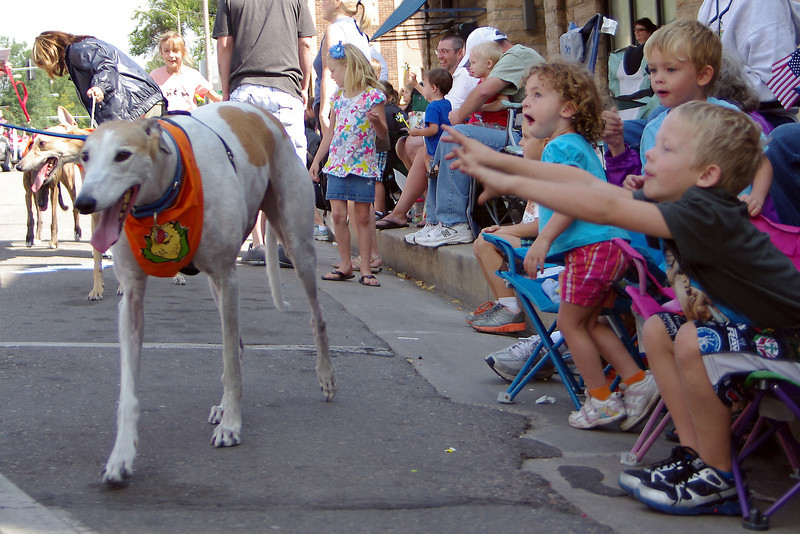 Landon Futo, 6, reaches for a rescued greyhound Saturday at the Corn Parade. Reacting behind him are his cousins Anna Schneider, 3, and Will Schneider, 4.