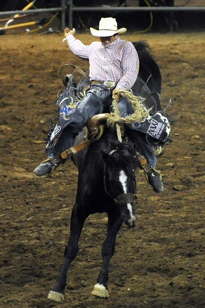 Cody Angland of New South Wales, Australia competes in the saddle bronc riding event during the Larimer County Fair and Rodeo on Tuesday, Aug. 7, 2012 at the Budweiser Events Center.
