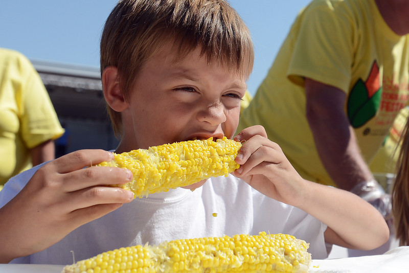 Eight-year-old Jaxon Reed munches on an ear of corn during the Old Fashioned Corn Roast Festival's corn eating contest on Saturday, Aug. 25, 2012 at Fairgrounds Park.