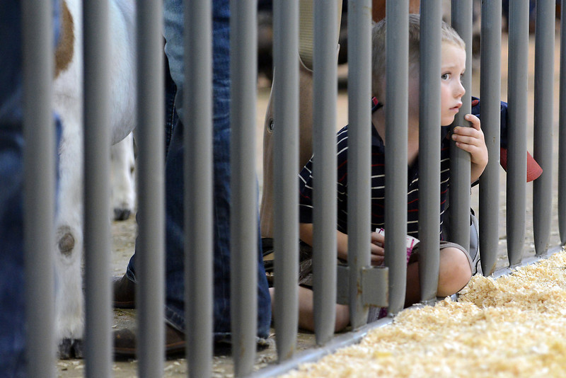 Four-year-old Teigan Federer peeks through the fence while watching the 4-H Goat Show during the Larimer County Fair on Thursday, Aug. 2, 2012 at The Ranch. Teigan is from Carr, Colo. and was there to watch his aunt and uncle who were showing animals at the fair.