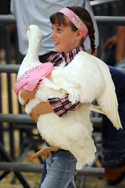 Eight-year-old Kelly Conlon of Berthoud carries her Embden goose in the show ring as it's auctioned off during the Larimer County Fair Junior Livestock Sale on Wednesday, Aug. 8, 2012 at The Ranch.