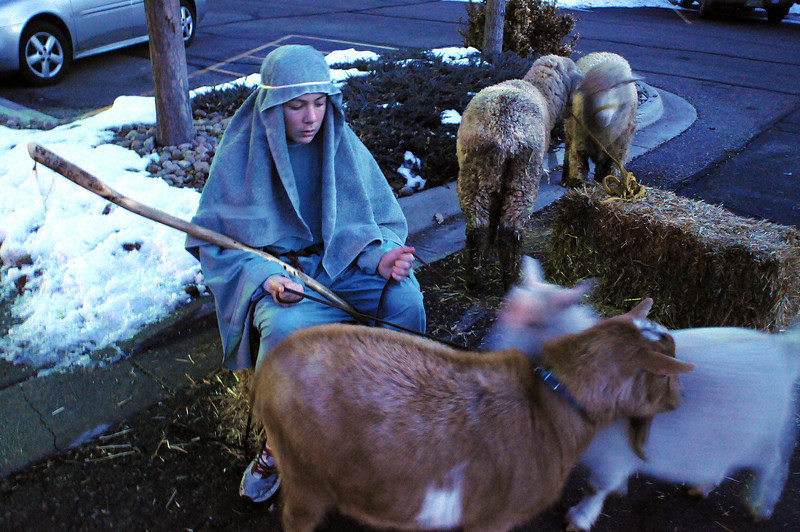Shepherd Josh Egle, 13, tends to his flock before a live nativity at First United Methodist Church.
