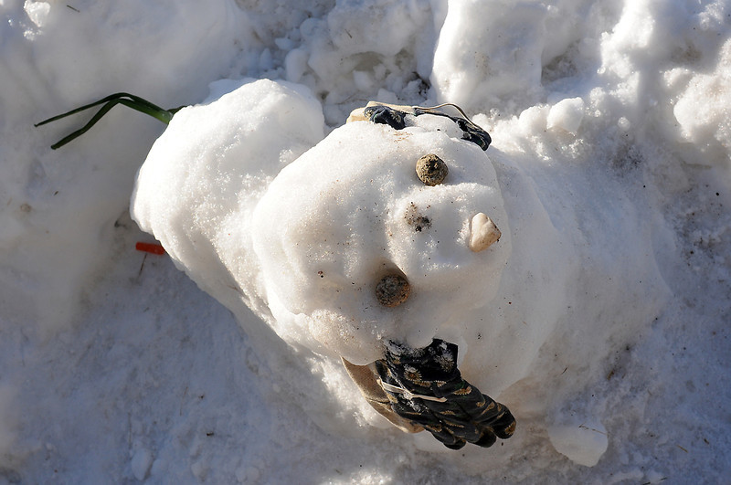 A snow dog constructed over the weekend on a pile of snow in the front yard of the Dewey's southwest Loveland home sports gloves for ears and an onion for a tail.