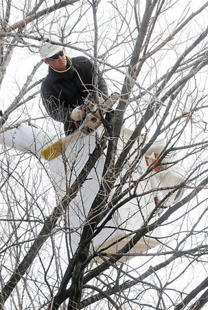 Andrew Freese, a certified arborist with Asplundh Tree Expert Co., uses a chain saw to trim trees Thursday afternoon at North Lake Park. Freese said he was removing hazards and dead limbs from the trees.