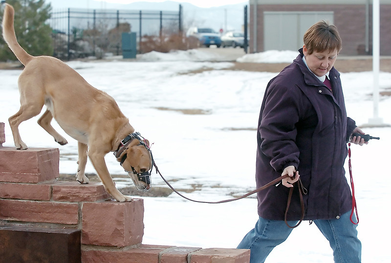 Cynthia Young of LaSalle leads her dog, Prince, across a stone wall Saturday at The Ranch while obedience training with other dog owners.