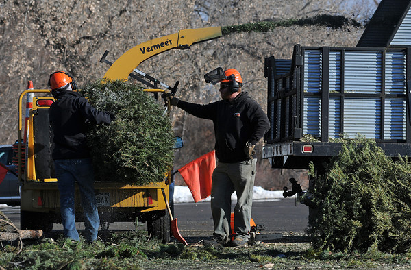 Jeff Caputo, left, and Drew Crecca of the Loveland Parks Department make mulch of Christmas Trees on Monday afternoon at Centennial Park. The crew, which chipped 800 trees on a previous day, hoped to chip 1,150 Christmas Trees by the end of the day.