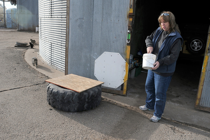 Melodee Warter prepares food for fed a colony of feral cats on Thursday outside a shop at the old sugar factory.