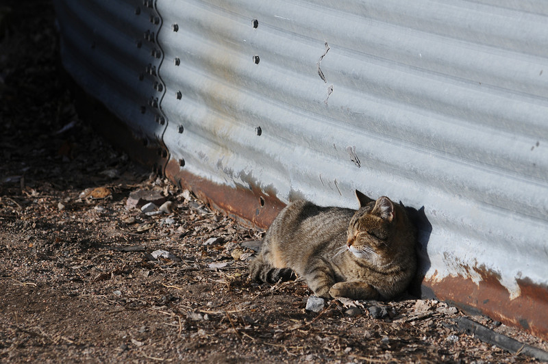 A feral cat bathes in the last rays of Thursday's sun at the old sugar factory.