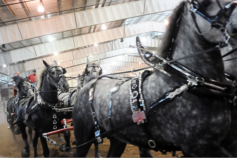 Greg Rowe, back left, drives a six-horse hitch of Percheron horses from the Bellevue, Ohio team Flat Rock Draft Horses around the Ranch-Way Feeds Indoor Arena at The Ranch while practicing with his brother, Michael Rowe, for the Big Thunder Draft Horse Show. The eighth-annual event kicks off today at 7 p.m. with additional shows at 2 p.m. on Saturday and Sunday.