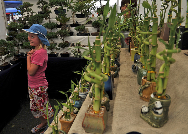 """Liliana Bachli, 10, makes her case to her father for a new plant Saturday during the annual Summerfest in the bonsai tree booth. Bachli, who recently celebrated a birthday, had her heart set on the braided """"money tree""""."""
