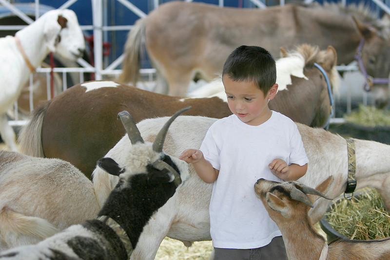 Jesse Turnoff, 4, reaches out to touch a goat during the SummerFest on Sunday at Loveland Civic Center Park.