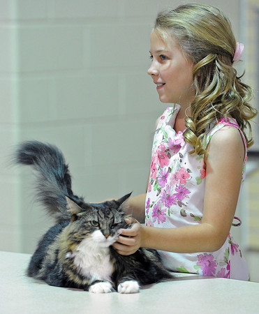 Heidi David, 10, pets her cat, Lily Love, an 8 year-old Norwegian forest cat, as she talks about what makes her special to the judge during the showmanship portion of the 4-H Cat Show at The Ranch on Friday.