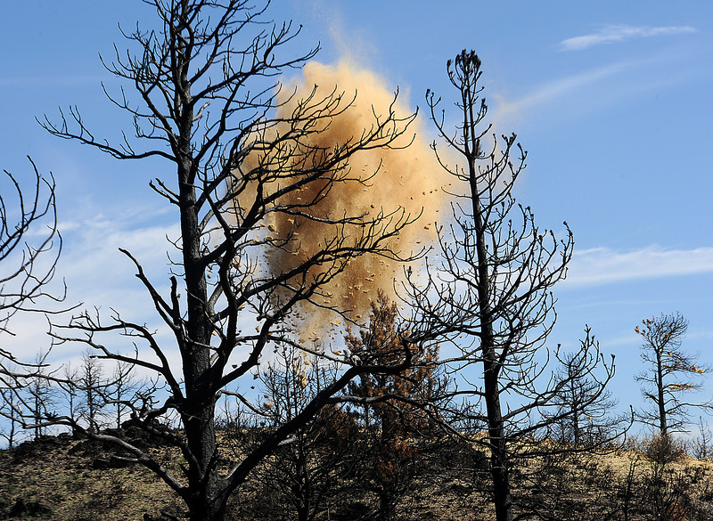 Straw dropped by a helicopter is seen through trees blackened by the High Park fire in Soldier Canyon near Horsetooth Reservoir.