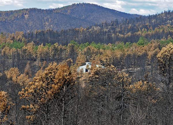 A home that survived the High Park fire is surrounded by charred forest Wednesday off Davis Ranch Road.