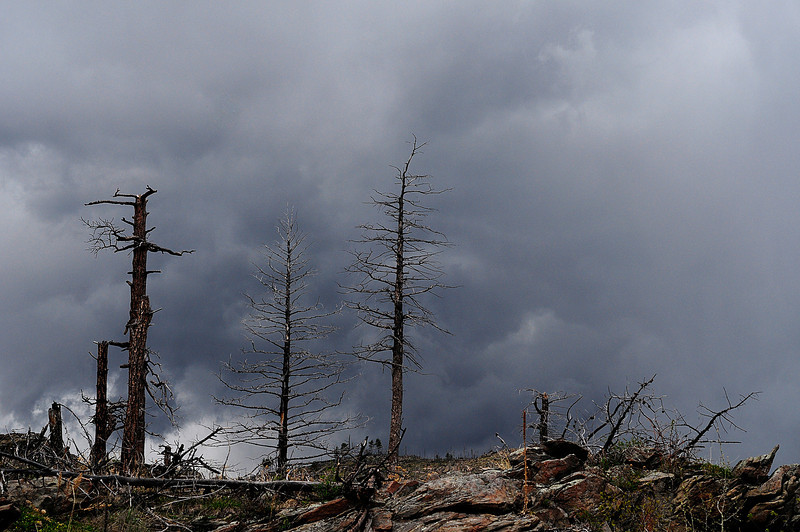 Burned trees still stand as a stark reminder of the Bobcat Gulch Wildfire that burned just over 10,000 acres just outside of Drake in early June 2000.