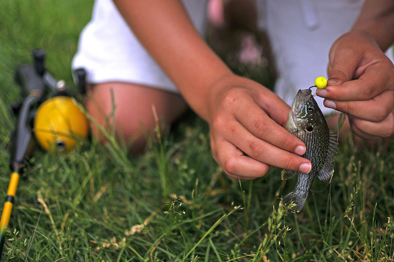 Eve Jacobson, 10, unhooks a bluegill she caught, Saturday, Jun 5, during The Loveland Police Department Fishing Derby at North Lake.  It was the second one she snagged in 10 minutes.  Bluegills cannot be kept, however, so it was tossed back into the water.