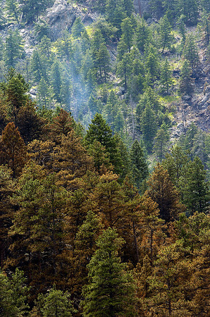 Smoke rises from a stand of trees at the Round Mountain fire on Sunday. Rains from the previous day helped the nearly 80 firefighters get a handle on the blaze.