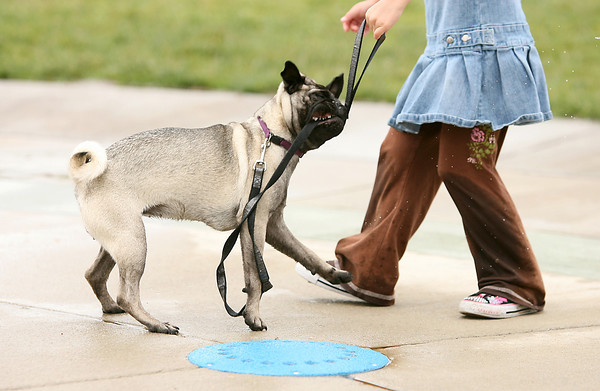 Delia Farnham, 4, holds the leash of her 7-month-old pug named Matty on Sunday at Fairgrounds Park.