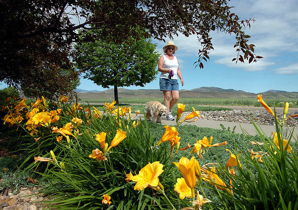 Gayle Culbertson of Loveland and her dog Buddy, a 10 year-old cocker spaniel, stroll past bright lilies during their daily walk Monday on 50th Street near Glen Isle Drive in Loveland. Photo by Jenny Sparks