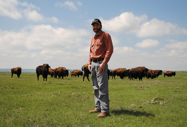"""Charles Rogers, Facilities Contracts Coordinator at Platte River Power plant, poses for a picture in front of one of the bison herds PRP owns and keeps in the open space around their plant north of Fort Collins, on Wednesday June 5, 2013. PRP owns two bison herds of about 20 bison each that have recently welcomed new calfs. The bison are a big part of the company, """"they where here before we where"""" Rogers said."""