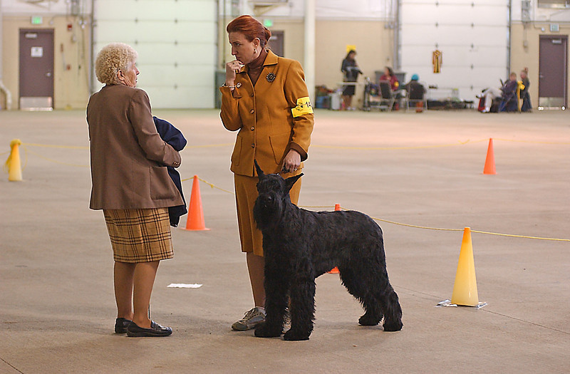 Judy Wrysinki, left, discusses her mini schnauzer with giant schnauzer owner JoAnn White, right, Mar 7, at The International Dog Show.  To participate in the competition, dog's must be registered as a recognized breed and they are judged on how well they conform to that breed standard.  Owners recieve a critique from judges explaining how their dogs were judged in such things as movement, coat and personality.