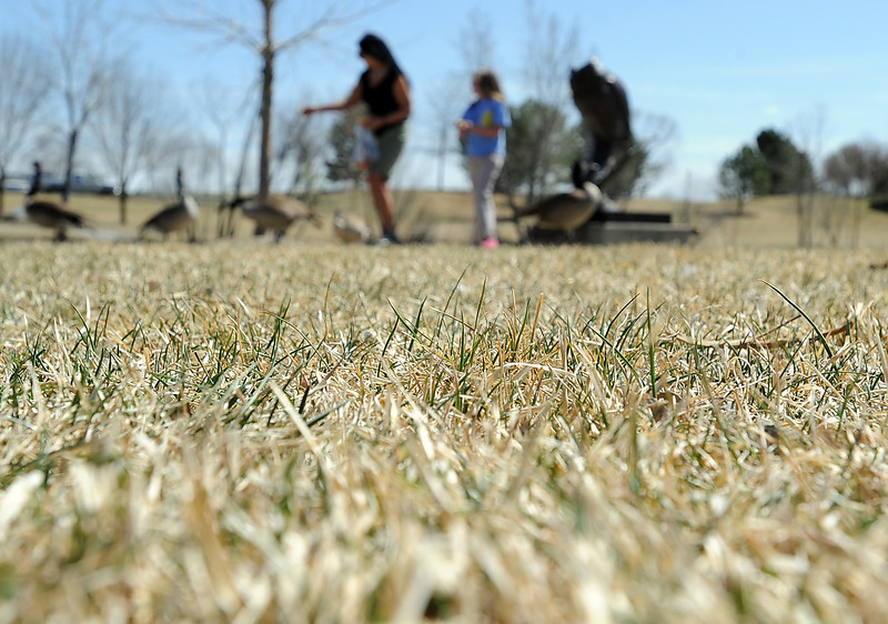 With dry grass starting to turn green in the foreground, Judy Burley, left and her granddaughter Jayma Cohrs, 9, feed the geese Thursday at North Lake Park in Loveland. Loveland has received hardly any precipitation during the month of March. Photo by Jenny Sparks
