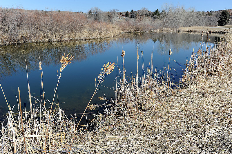 Dry grasses and cattails surround a pond at the Morey Wildlife Reserve in Loveland on Tuesday. Photo by Jenny Sparks
