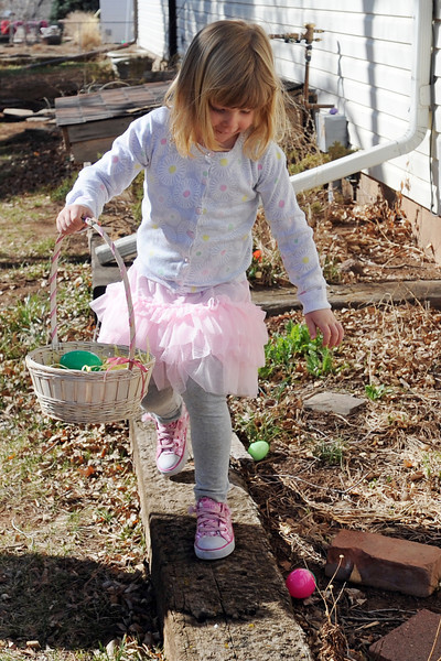 Four-year-old Zoe Ann Link gathers Easter eggs during an Easter egg hunt on Saturday, March 30, 2013 at Buckhorn Presbyterian Church in northwest Loveland.